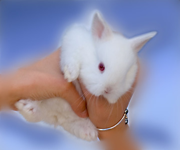 White rabbit held by a young girl