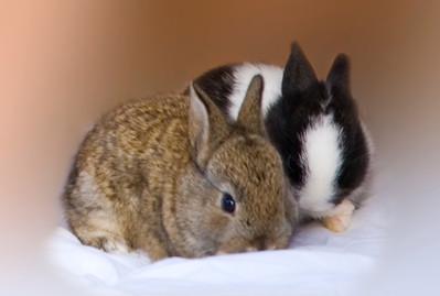 Sibling bunny rabbits