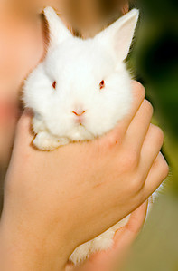 So cute, this little white bunny rabbit is held up to a young girls cheek