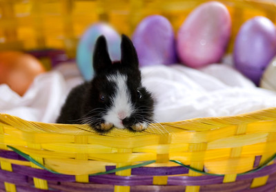Black and white bunny in an Easter basket