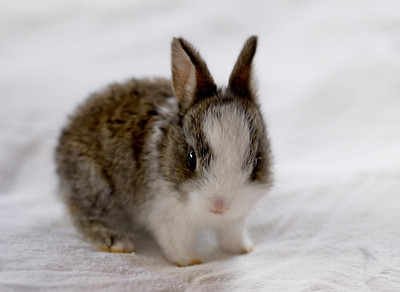 Such a cute little being  Little brown and white bunny rabbit