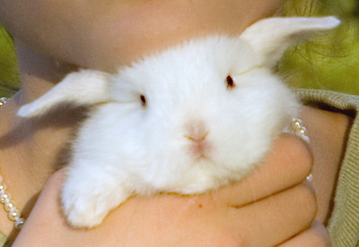 Funny and sweet, a young girl rests her chin on the white bunny's head