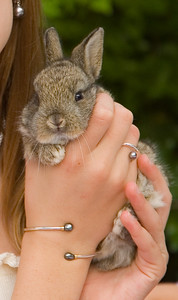 Brown bunny held by a young girl