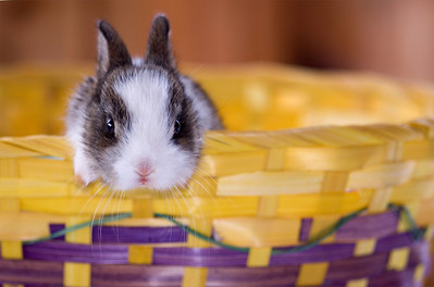 grey and white bunny in an Easter basket
