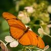 Julia butterfly; 10x10