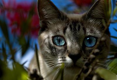 Bella, up in a bottlebrush tree