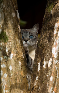 Bella in a tree