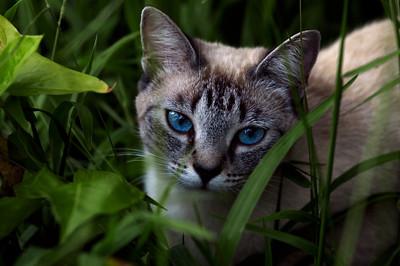 Bella, through the grass