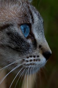 Bella in profile