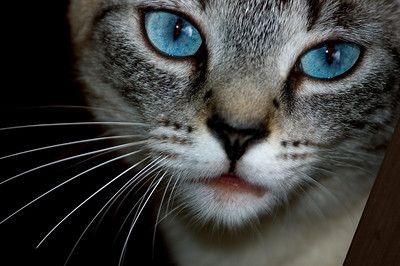 Bella, pretty blue-eyed girl