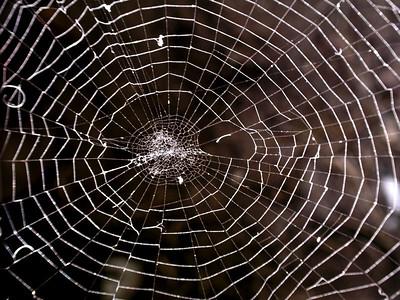 spider, spiderweb, insect