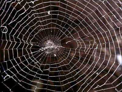 spider, spiderweb, insect