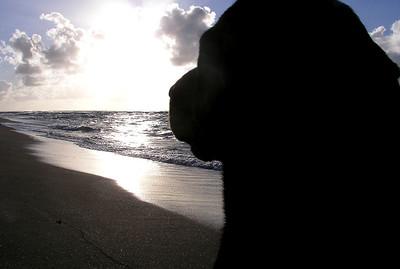 Black Labrador on the Beach