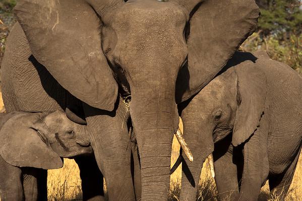 Savute National Park - Botswana - Africa
