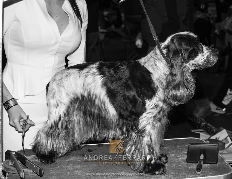 Esposizione internazionale canina Modena gennaio 2016 - (72)
