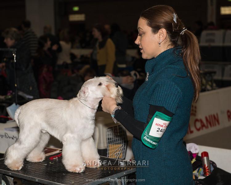 Esposizione internazionale canina Modena febbraio 2015 #21