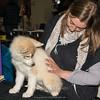 Esposizione internazionale canina Modena gennaio 2016 - (87)