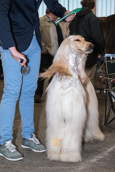 Esposizione internazionale canina Reggio Emilia marzo 2016 (88)