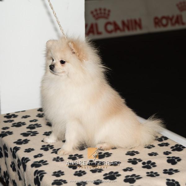 Esposizione internazionale canina Modena febbraio 2015 #41