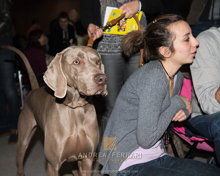 Esposizione internazionale canina Modena febbraio 2015 #27