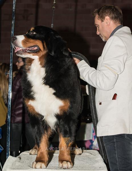 Esposizione internazionale canina Modena gennaio 2016 - (22)