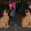 Ti do un bacio Il bacio non lo voglio Esposizione internazionale canina Modena gennaio 2016