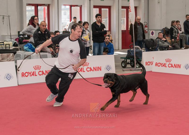 Esposizione internazionale canina Reggio Emilia marzo 2016 (21)