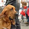 Esposizione internazionale canina Reggio Emilia marzo 2014 #4