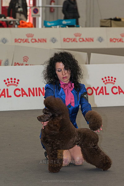 Esposizione internazionale canina Reggio Emilia marzo 2017 (16)