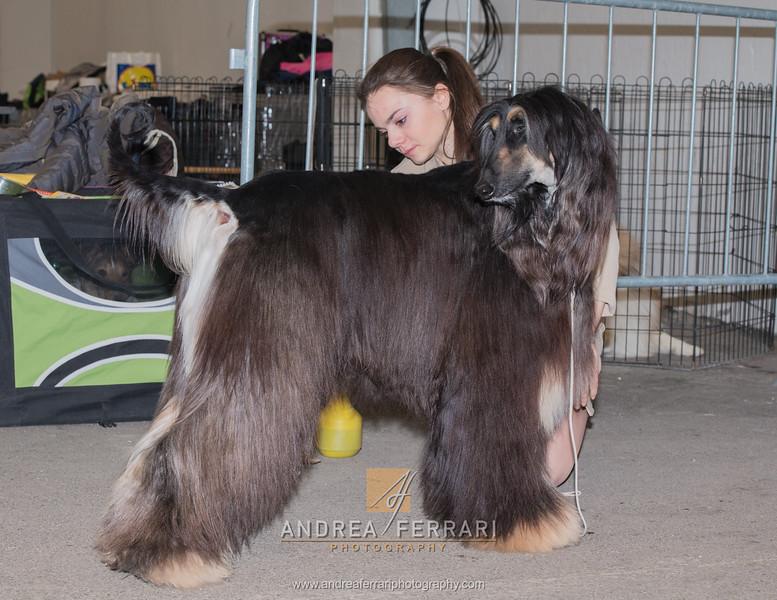Esposizione internazionale canina Reggio Emilia marzo 2016 (83)