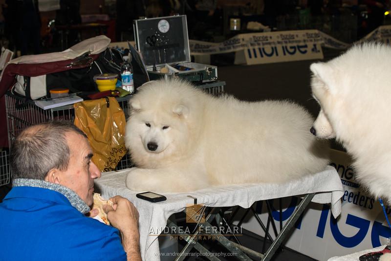 Che fame - Esposizione internazionale canina Modena gennaio 2016 - (65)