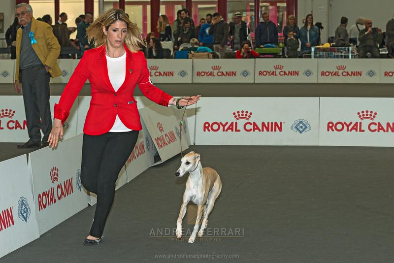 Esposizione internazionale canina Reggio Emilia marzo 2017 (14)