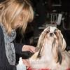 Esposizione internazionale canina Modena febbraio 2015 #25