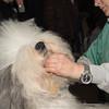 Esposizione internazionale canina Reggio Emilia marzo 2015 #7