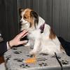 Esposizione internazionale canina Reggio Emilia marzo 2015 #4