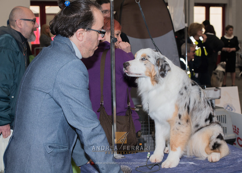 Esposizione internazionale canina Reggio Emilia marzo 2016 (57)