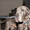 Esposizione internazionale canina Reggio Emilia marzo 2015 #16