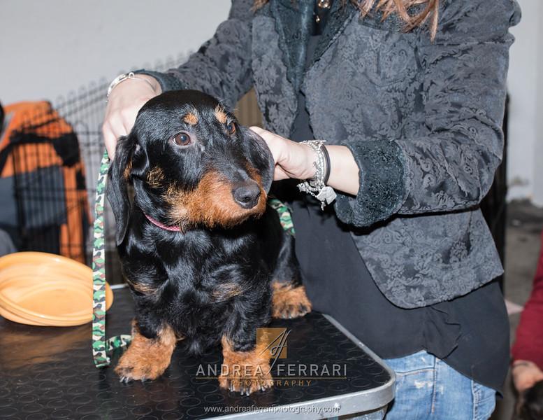 Esposizione internazionale canina Reggio Emilia marzo 2016 (98)