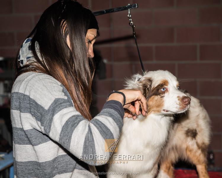 Esposizione internazionale canina Modena febbraio 2015 #9