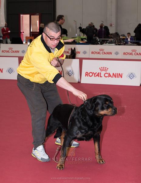 Esposizione internazionale canina Reggio Emilia marzo 2016 (2)
