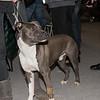 Esposizione internazionale canina Modena febbraio 2015 #45