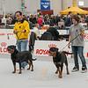 Esposizione internazionale canina Reggio Emilia marzo 2015 #1