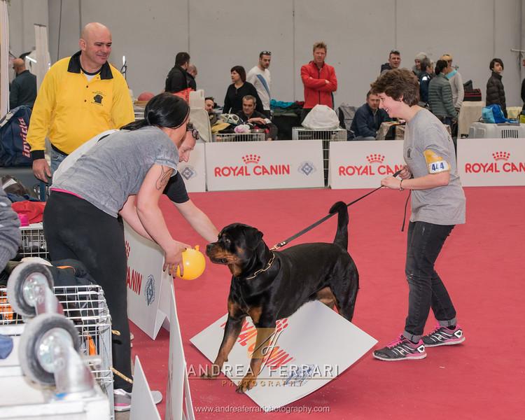 Esposizione internazionale canina Reggio Emilia marzo 2016 (54)