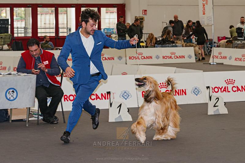 Esposizione internazionale canina Reggio Emilia marzo 2017 (24)
