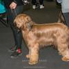 Esposizione internazionale canina Modena gennaio 2016 - (54)