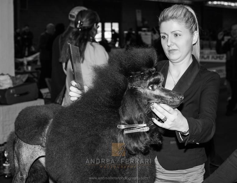 Coiffeur  - Esposizione internazionale canina Modena gennaio 2016 - (70)