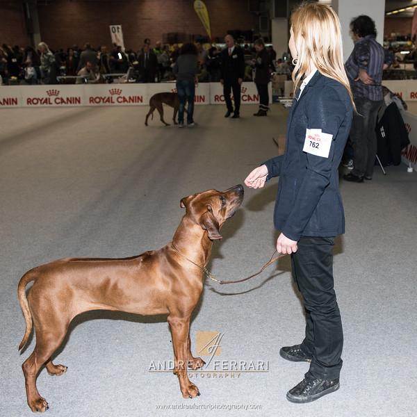Esposizione internazionale canina Modena febbraio 2015 #30