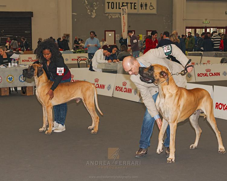 Esposizione internazionale canina Reggio Emilia marzo 2017 (7)