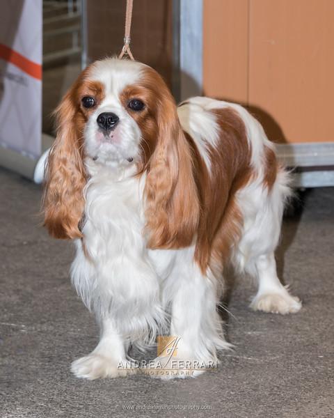 Esposizione internazionale canina Reggio Emilia marzo 2016 (102)