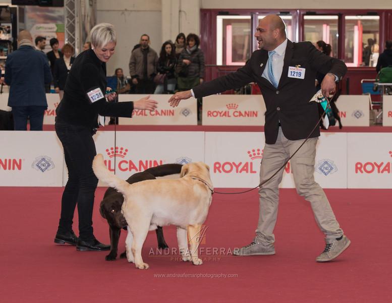 Esposizione internazionale canina Reggio Emilia marzo 2016 (63)